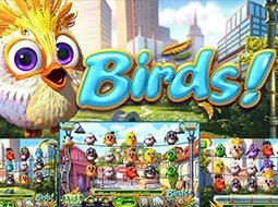 Birds Casino Game